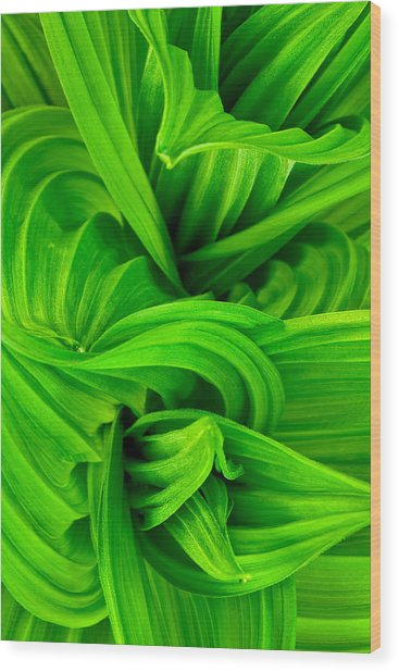 Wavy Green Wood Print