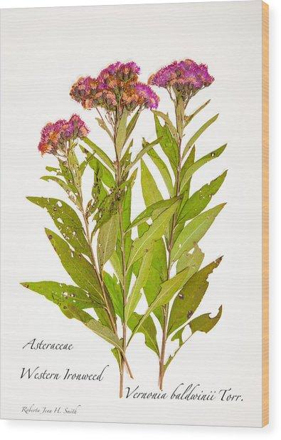 Western Ironweed Wood Print