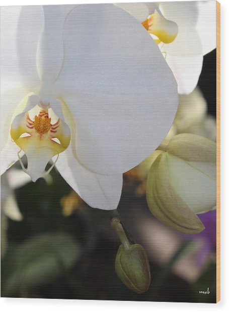 White Orchid Three Wood Print by Mark Steven Burhart