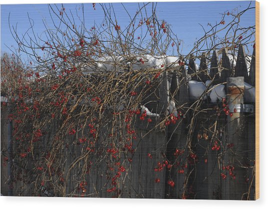 Winter Berries Wood Print by Donna Desrosiers