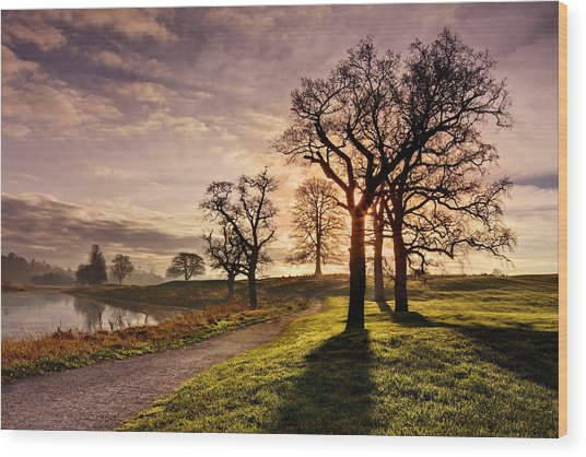 Wood Print featuring the photograph Winter Morning Shadows / Maynooth by Barry O Carroll