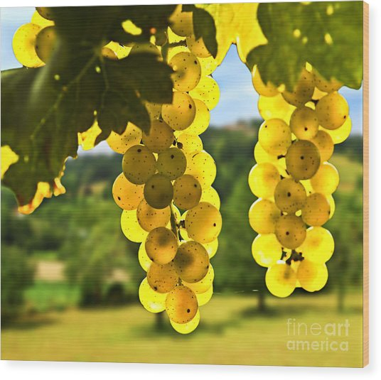 Yellow Grapes Wood Print