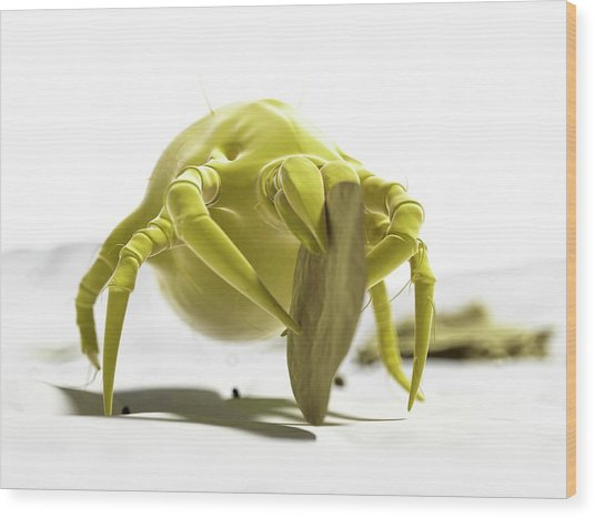 Dust Mite Wood Print by Sciepro/science Photo Library