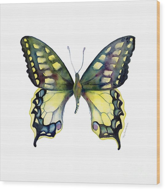 20 Old World Swallowtail Butterfly Wood Print