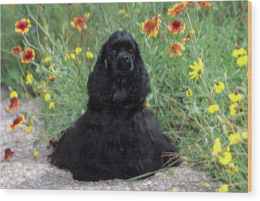 2000s Black Cocker Spaniel Puppy Dog Wood Print