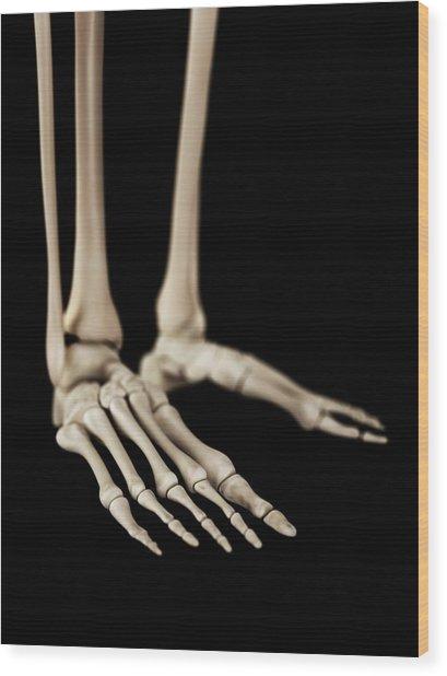 Human Foot Bones Wood Print by Sebastian Kaulitzki