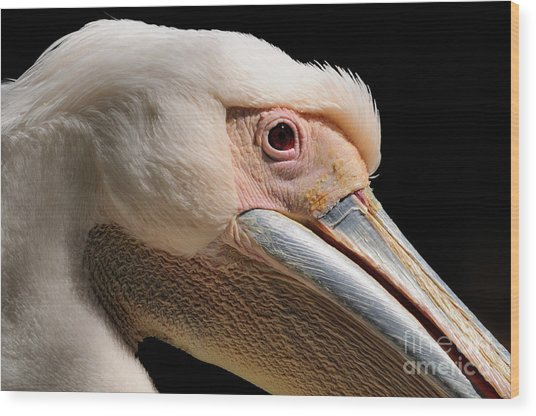 Pelican Wood Print by Marc Bittan