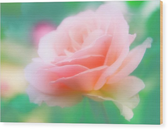 Rose (rosa Sp.) Wood Print by Maria Mosolova/science Photo Library