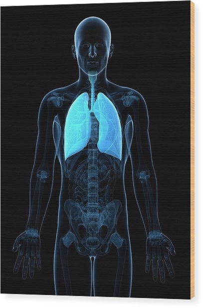 Healthy Lungs Wood Print by Sciepro/science Photo Library