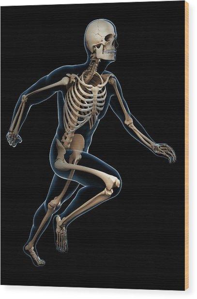 Skeletal System Of Runner Wood Print by Sebastian Kaulitzki