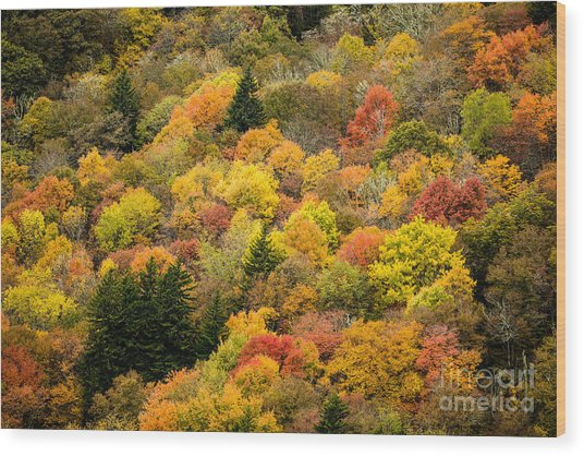 2679 Blue Ridge Parkway Wood Print by Stephen Parker