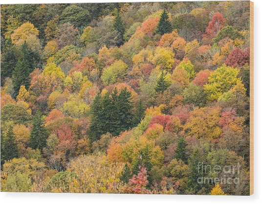 2682 Blue Ridge Parkway Wood Print
