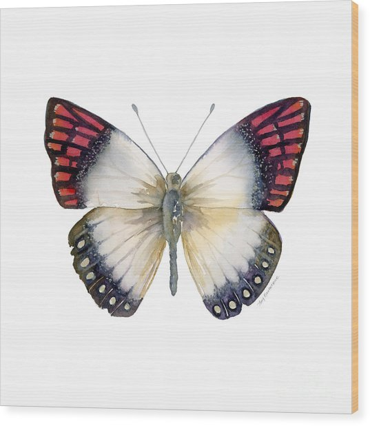 27 Magenta Tip Butterfly Wood Print