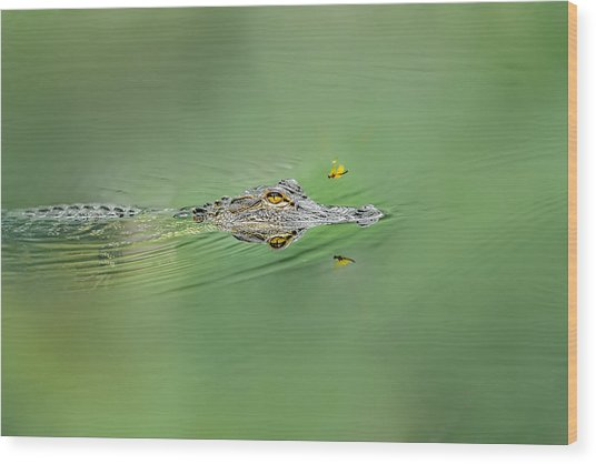 Alligator Wood Print