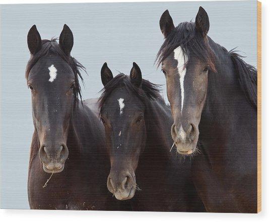 3 Amigos Wild Mustang Wood Print