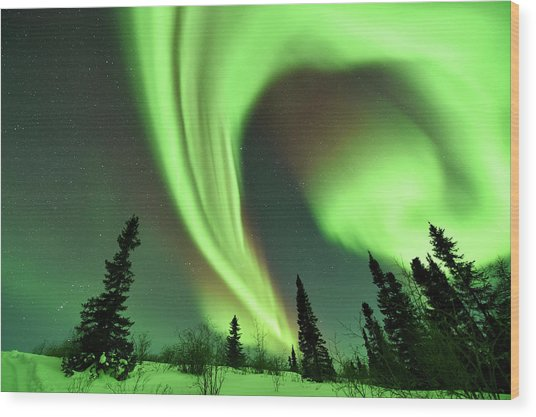 Aurora Borealis Over Trees Wood Print by Dr P. Marazzi