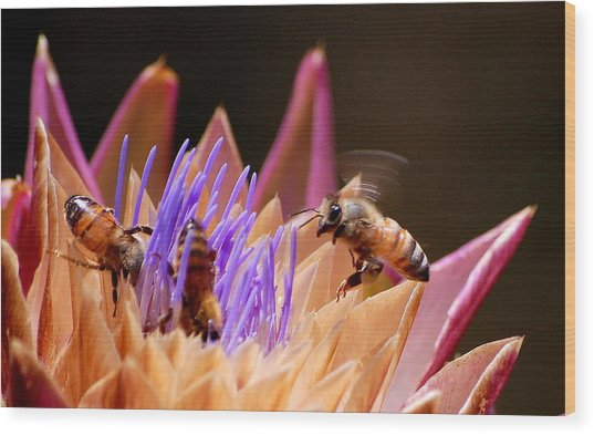 Bees In The Artichoke Wood Print