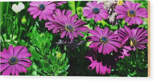 Blooms In Bloom Wood Print by JAMART Photography