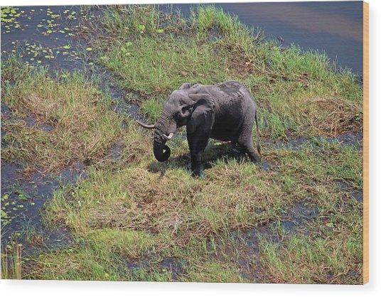 Botswana, Okavango Delta Wood Print