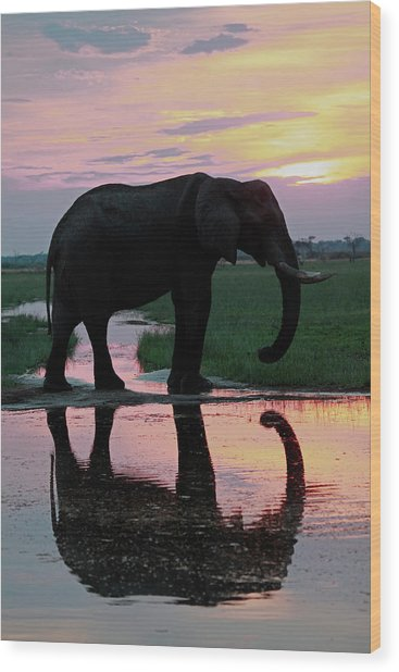 Botswana, Savute Wood Print