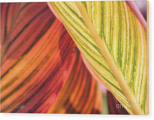 Canna Lily Named Durban Wood Print