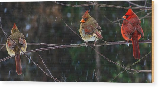 3 Cardinals On A Branch  Wood Print