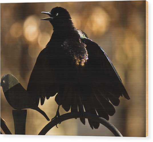 Common Grackle Wood Print