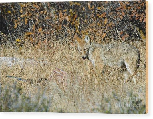 Coyotes Wood Print