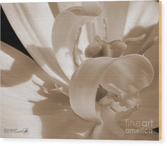 Double Late Tulip Named Angelique Wood Print