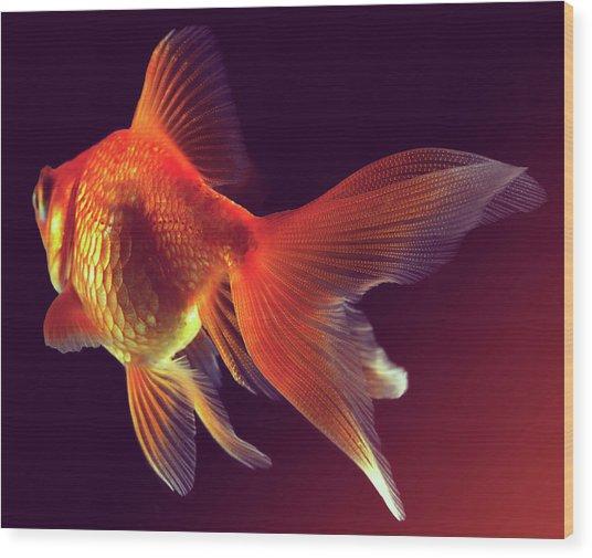 Goldfish Wood Print by Mark Mawson