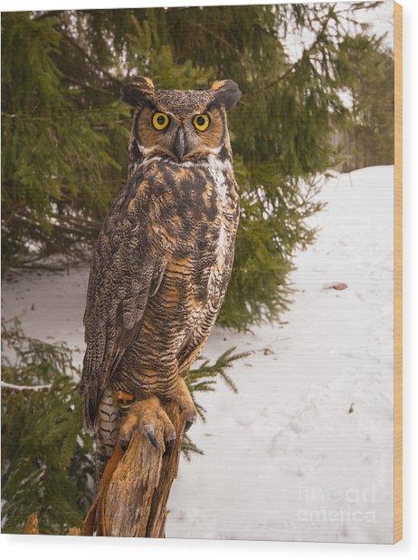 Great Horned Owl Wood Print by Simon Jones