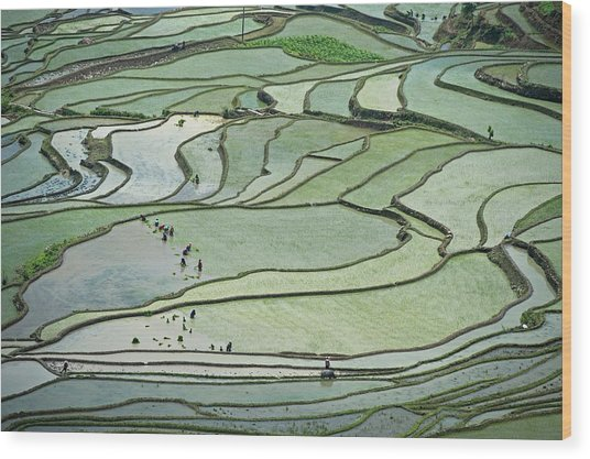 Hani Rice Terraces Near Yuanyang Wood Print by Tony Camacho