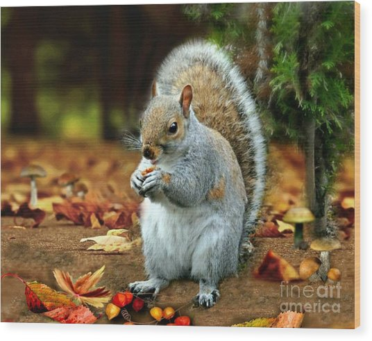 Harry The Squirrel Wood Print