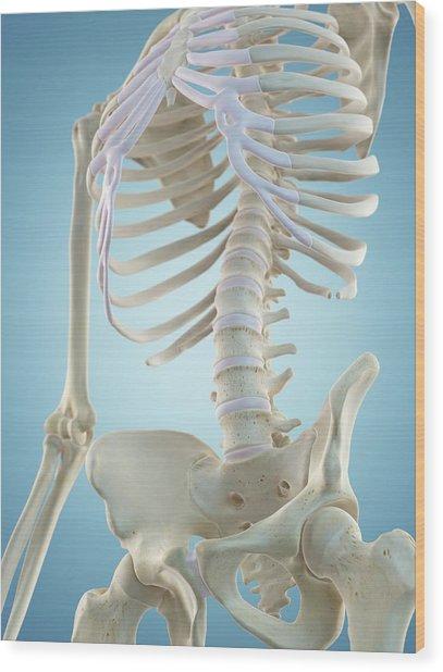 Human Skeletal Structure Wood Print by Sciepro