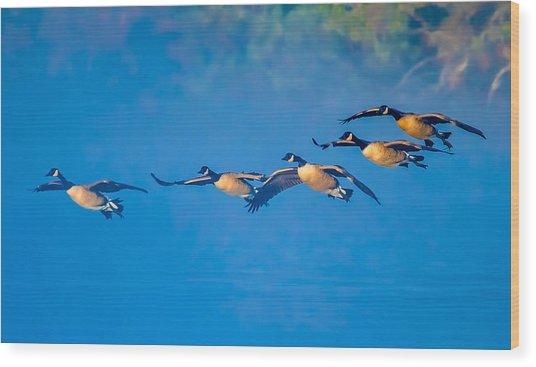 Incoming Geese Wood Print