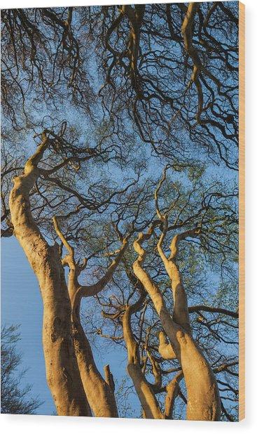 Ireland, County Antrim, Ballymoney Wood Print by Walter Bibikow