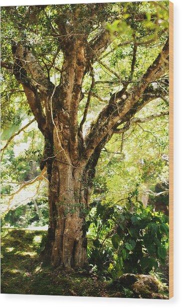 Kingdom Of The Trees. Peradeniya Botanical Garden. Sri Lanka Wood Print