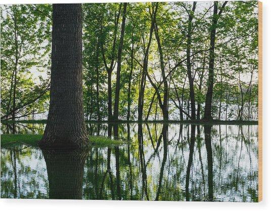 Lake Nokomis In A Wet Spring Wood Print