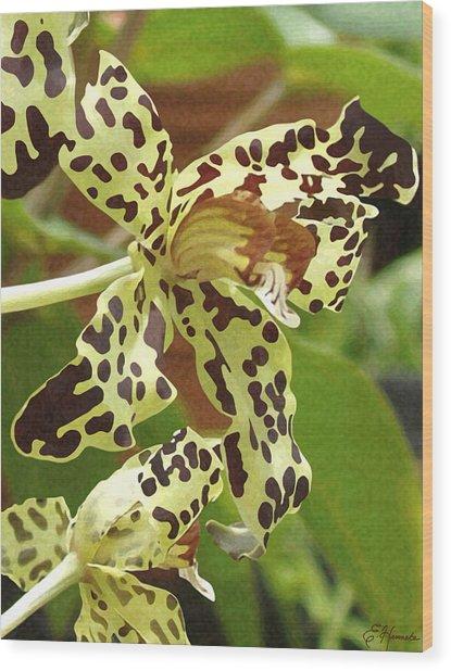 Leopard Orchids Wood Print