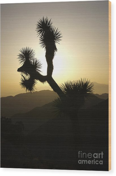 New Photographic Art Print For Sale Joshua Tree At Sunset Wood Print