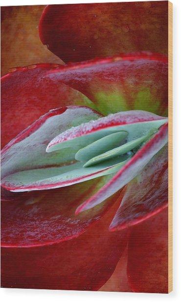 Paddle Plant Wood Print