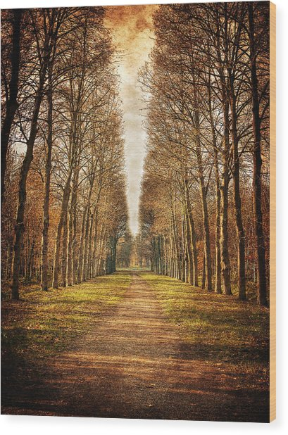 Wood Print featuring the photograph Path In The Woods / Versailles by Barry O Carroll