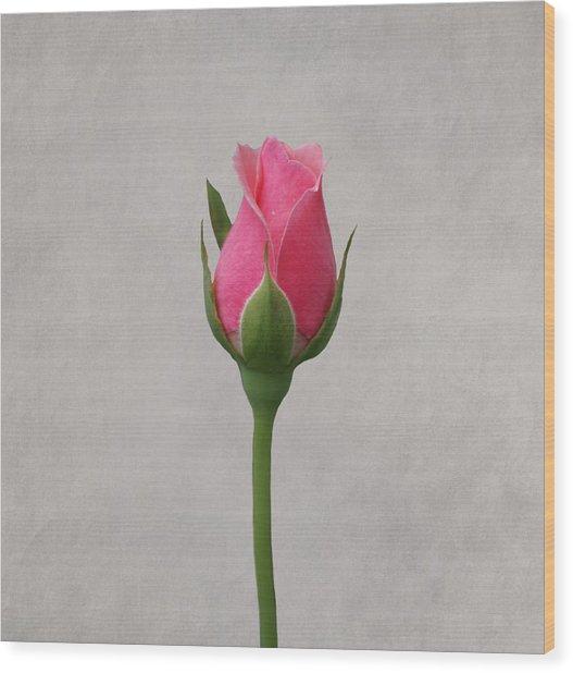 Pink Rosebud Wood Print