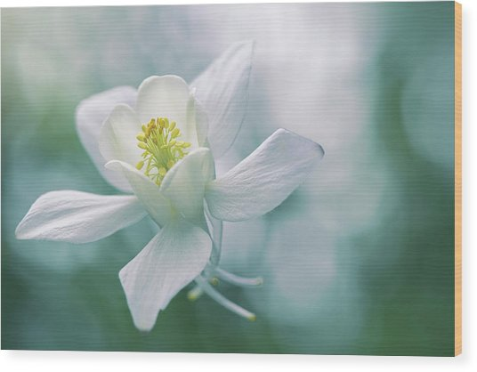 Purity Wood Print by Jacky Parker