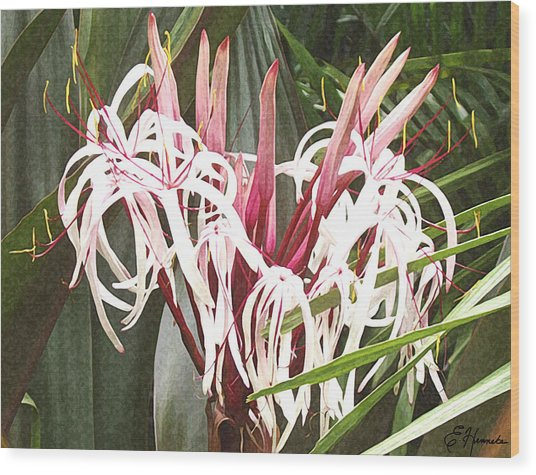 Queen Emma Crinum Lilies Wood Print