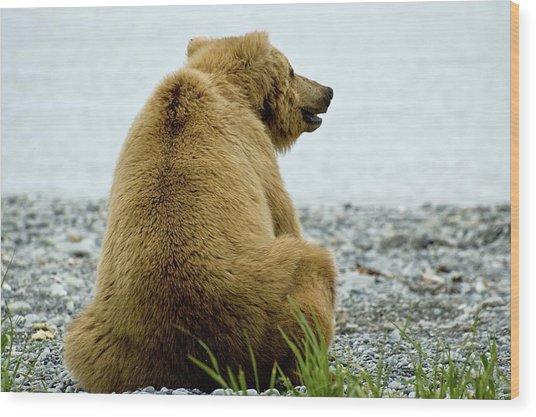 Resting Bear Wood Print