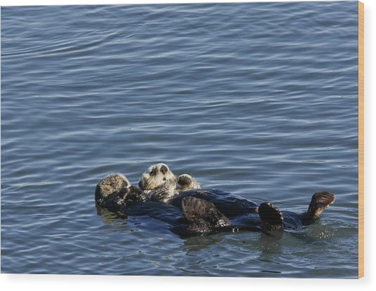 Sea Otters Wood Print by Bob Gibbons/science Photo Library