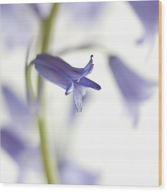 Spring Bluebells Wood Print