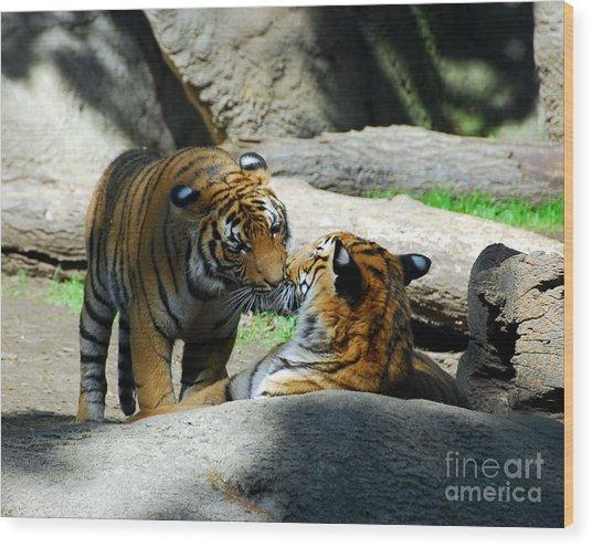 Tiger Love 2 Wood Print