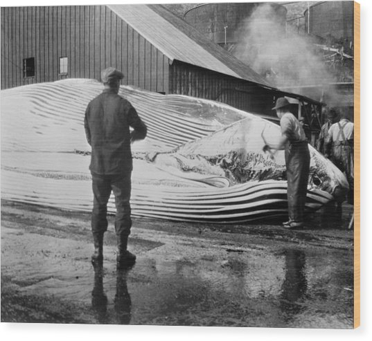 Whaling, C1935 Wood Print by Granger